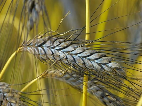 La parábola del sembrador