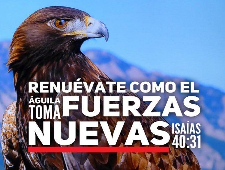 Como el águila