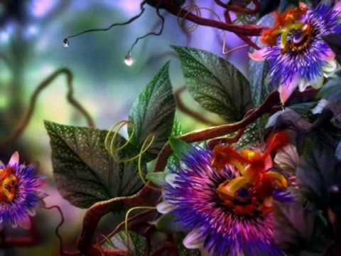 El hermoso color del amor  reflexiones cristianas Avanzapormas.com